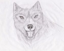 Wolf Sketch 2 by Aleuck