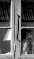 Cat on the window by lpetrusa