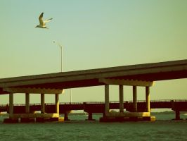 Bird and Bridge by editordistriktmag
