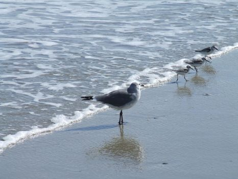 Seabirds in the Surf by kato-yabanjin