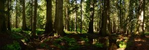 Ross Creek Cedars 2012-06-25 by eRality