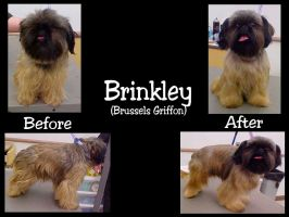 Brinkley Before and After by imerald