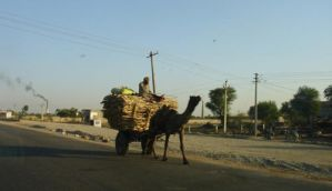 India Camel Transport by 99thbone