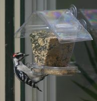Woodpecker at my Birdfeeder by dan551x
