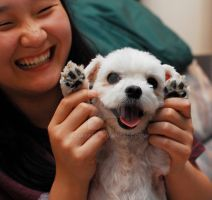 Smiley Maltese by nomibear