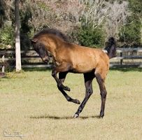 3 month old Foal by Deirdre-T