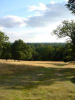 Stock 161: Richmond Park by AlzirrSwanheartStock