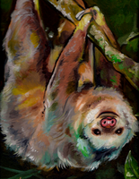 Two-Toed Sloth by spandexcrusader