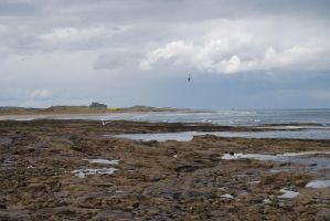 Birds over Bamburgh Castle by mr-macd