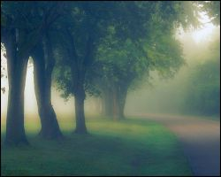 A Little Fog by bamako