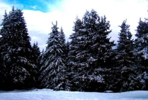 Snow On Trees by Frances23