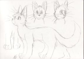 .:Cat Reference Sheet:. by AzureDreamrealm