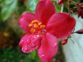 Raindrops... by Hedwigs-art