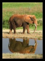 Elephant Reflection by vita-luna