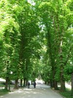 Trees by Severius