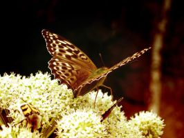 Butterfly on a flower3 by Korolevatumana