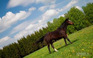 A horse by marius-s