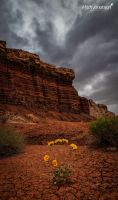Sunflowers and Red Rock by mjohanson