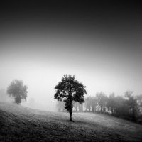 Traumnovelle des Nebels 2 by slygarde