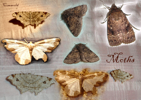 Moths pack by Comacold-stock