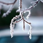 Frost-twig by DaaMaaN