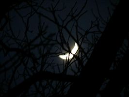 Moon Through the Tree by Michies-Photographyy