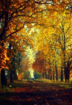 Autumn... by BaxiaArt