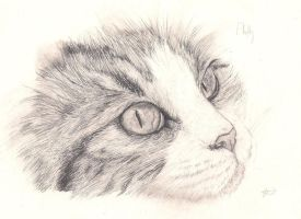 Look at Me: Pencil by Emasone