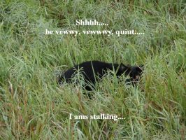 The Stalker of Mid-morning... by AutoBubbs