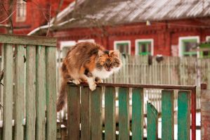 Cat on fence by Anna-Belash