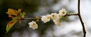 Blossom. . . by paradoxofminds