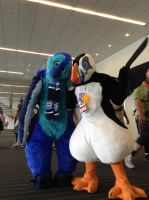 Anthrocon 2014: BuzzyBeak and Tuft Puffin by murkrowzy