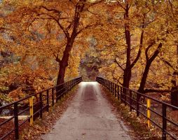 Autumn by pkritiotis