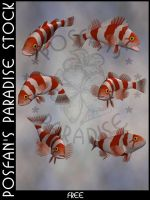 Animals 092 Pacific Rockfish by poserfan-stock