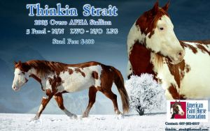 My first attempt at a stallion advert. by ThunderhillPaints