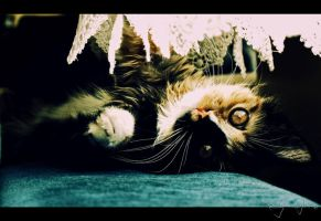 My Cat by IBYstyle