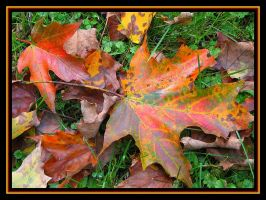 Seasons Change by picworth1000wrds