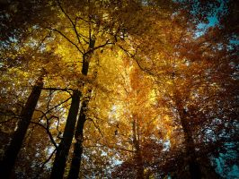 Autumn in a forest by Balopp