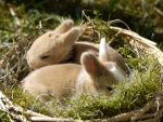 My 2 Sweet Baby Bunnies by bluediabolo