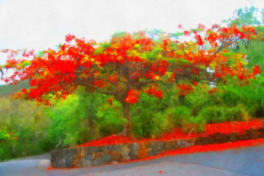 Flame Tree by aumini1