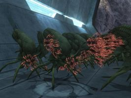 FLOOD INFECTION FORM IN HALO 3 by victortky