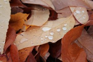 Rain on fallen leaves by Eternalfall1