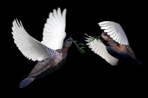 Turtle Doves by Elephant883
