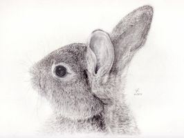 Wild Rabbit by 7iiZj