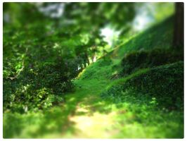 A path in tiltshift by fifoux