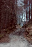 blurred road by collien