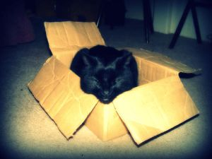 Boo in the Box by Insulin Addict - Kedi Severlere