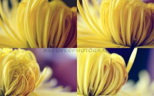 yellow touch by raeuve