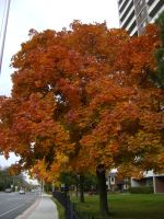Canadian Fall Colours 37 by Aswang301