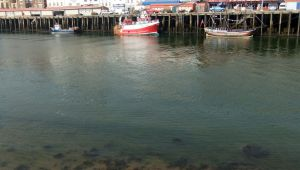 Whitby Harbour (15) by PaulineMoss
